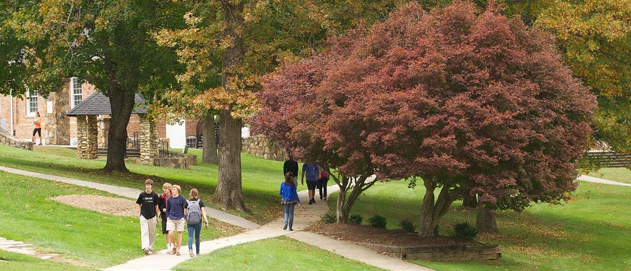 yhc lawn path fall