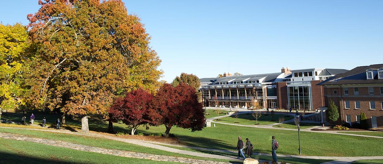 trees ib yhc campus